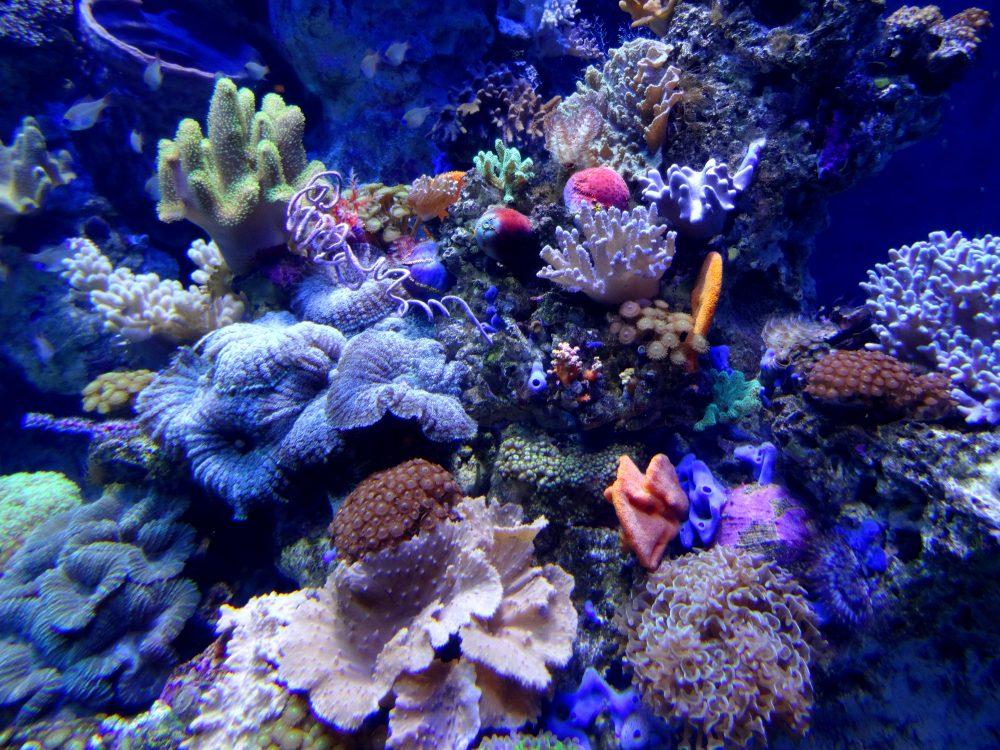 Akwarium Sentosa