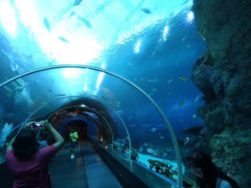 Sentosa akwarium
